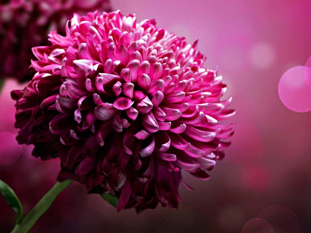 fiore-sfondo.png