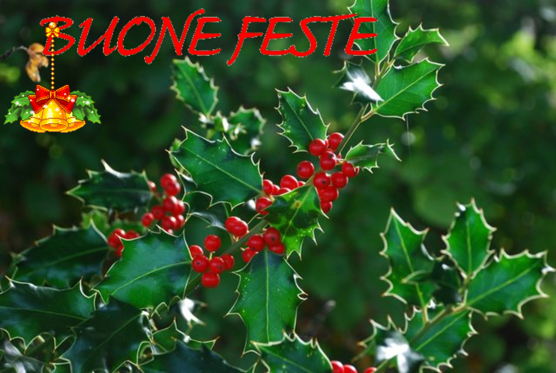 agrifoglio_buone_feste.png